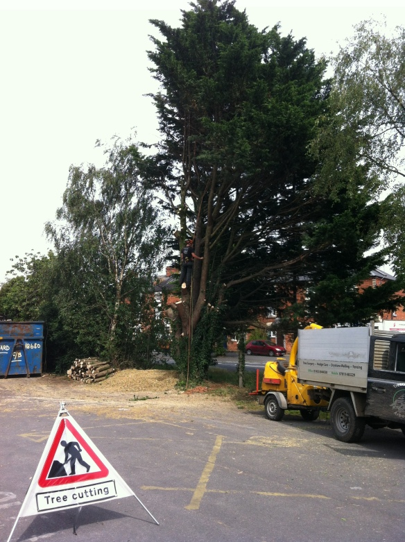 """That's the easy bit done"" ~ Dismantling a large Leylandii in Gloucestershire"