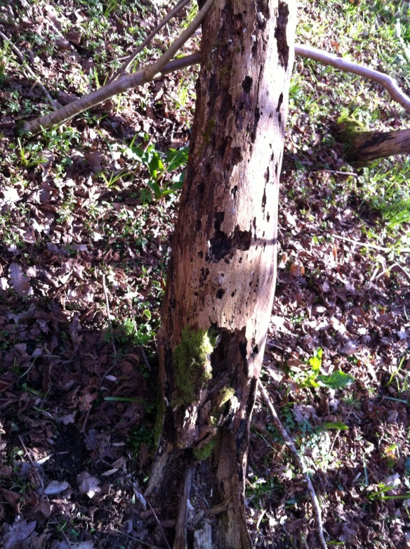 Standing deadwood, left in situ, providing a wealth of invertebrate habitat