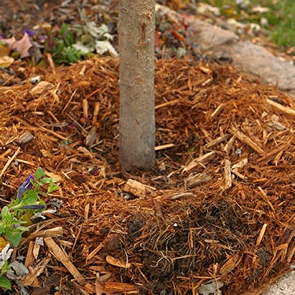 tree_planting_mistakes_0311_04